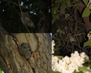Backyard Photograph through the eyes of a Nature Photographer!!!