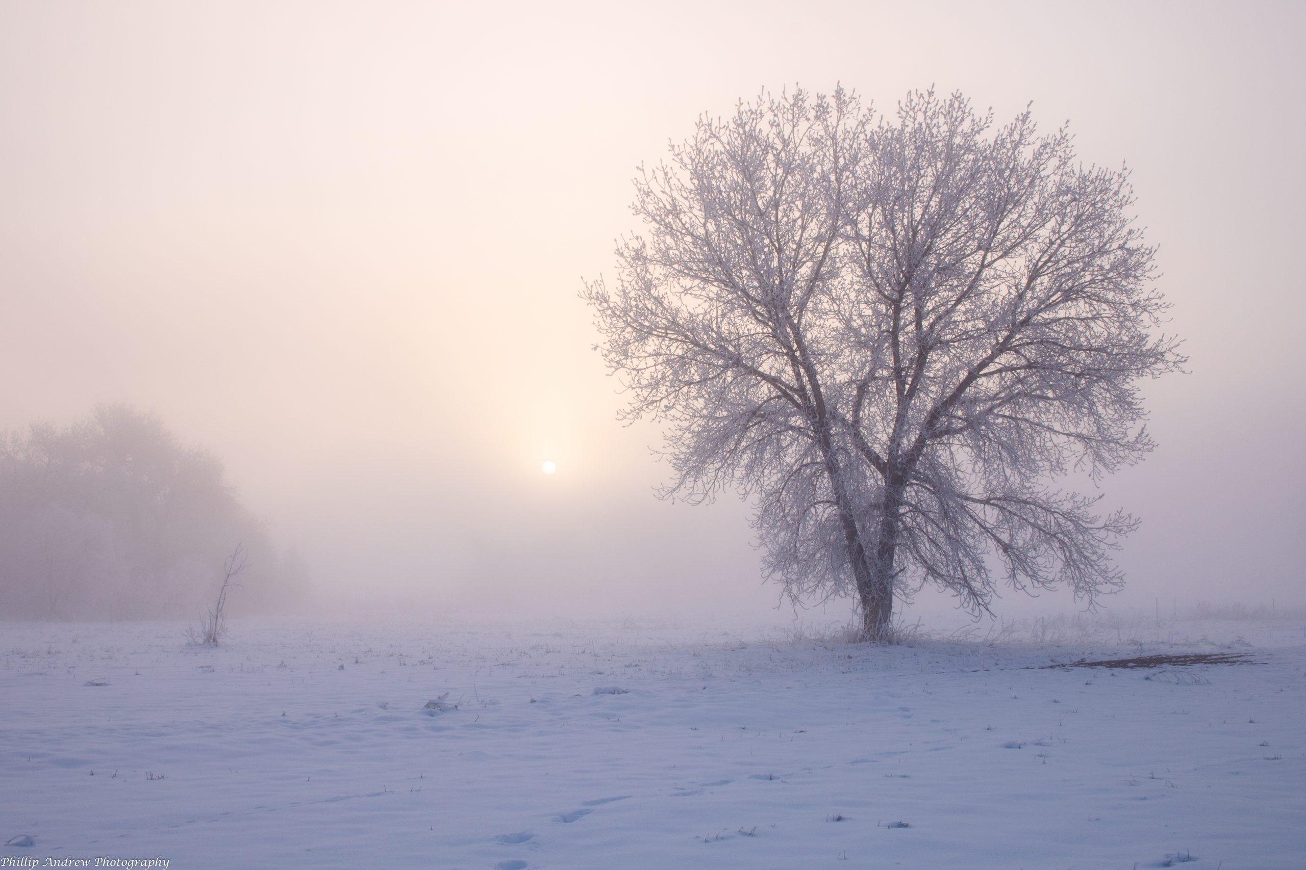 A Greying Morning
